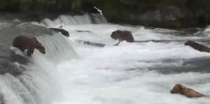 Bear in Falls