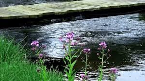 Flowers by Dock